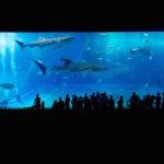 日本でオオワニザメに会える水族館はどこ!?