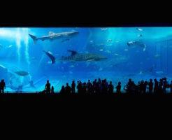 オオワニザメ 水族館