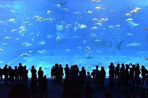 ホオジロザメ 水族館 いない 飼育